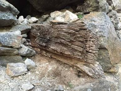 Ein alter Baumtram ragt aus den Mauern. Er ist wohl schon einige hundert Jahre alt und muss aufgrund seines schlechten Zustandes entfernt werden.