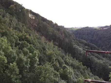 Blick vom Wehrturm Richtung Limberg. Man sieht hier die Rodung der mit Käfer befallenen Bäumen.