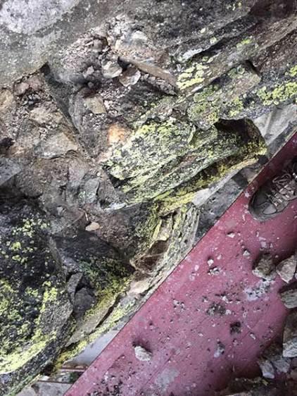 An der Süd-Westseite des Wehrturms findet man diese Flechten an den Steinen.